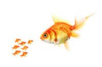 gold-fish-300x196